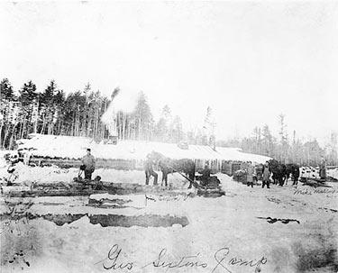 Gus Sextons Camp in the Pineries, 1900.