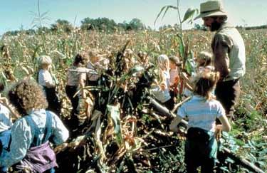 Shocking corn was a common method of corn harvesting in Kelley's era.