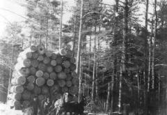 Wilson Logging Company picture load, Akeley, 1900