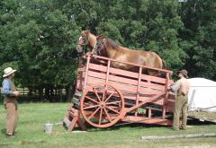 A team of horses walk a two-horsepower treadmill to power a grain thresher.
