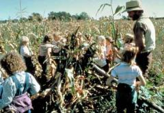 Shocking corn was a common method of corn harvesting in Kelley&#039;s era.