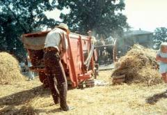 The treadmill-powered threshing machine still threshes wheat and oats today.